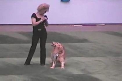 Canine Freestyle,musical freestyle,doggie dancing,Carolyn Scott,Golden Retriever,Rookie