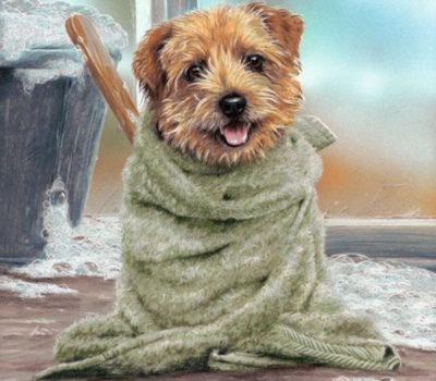 Norfolk Terrier,Norwich Terrier,Perfect Demon,nickname,