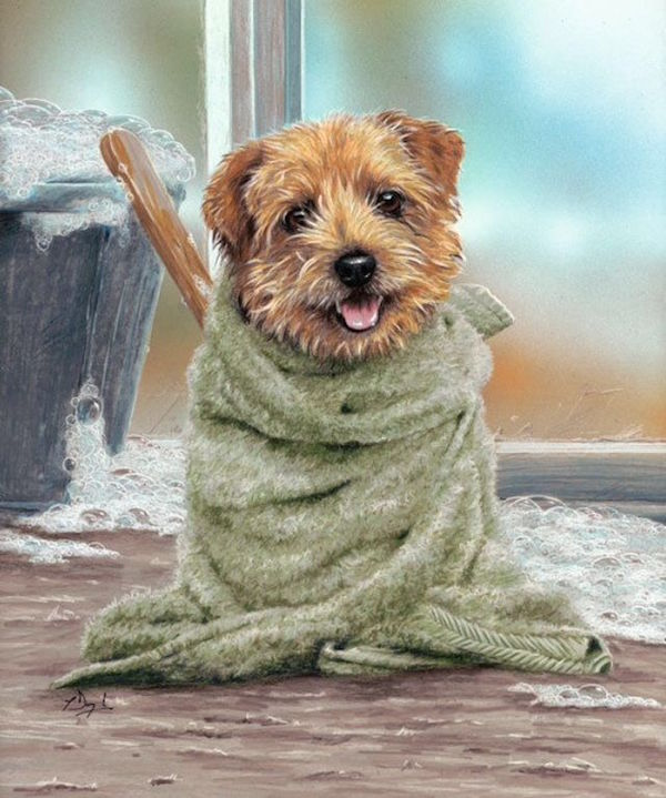 Norfolk Terrier,Norwich Terrier,Perfect Demon,nickname,