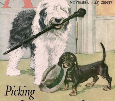 American Magazine,Old English Sheepdog,Dachshund