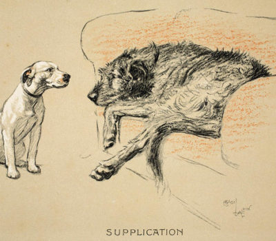 Irish Wolfhound, Saint Edmund Campion,clergy