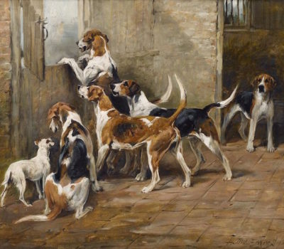 English Foxhound,couples,ragged,terms,standard