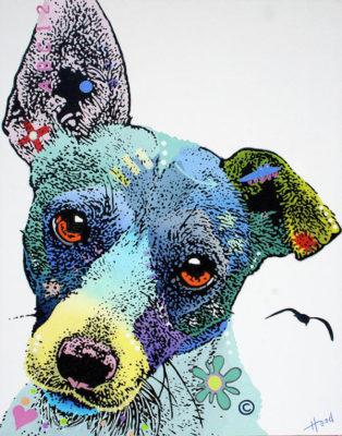 Brazilian Terrier,Fox Paulistinha,Terrier Brasileiro.