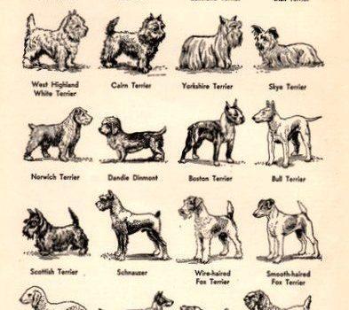 Terriers,EB White