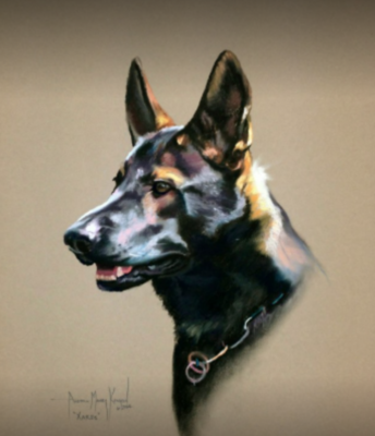 German Shepherd Dog,sable,color