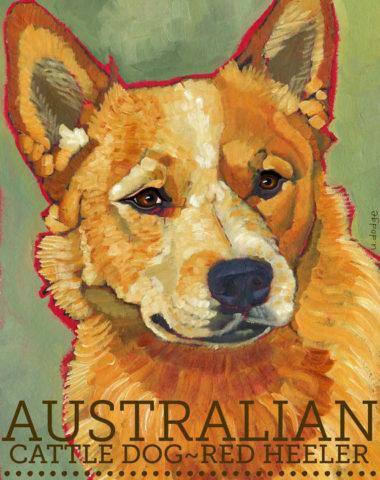 Australian Cattle Dog,Smithfield.