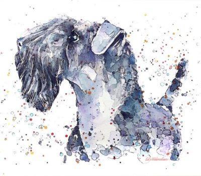 Kerry Blue Terrier,color,genetics