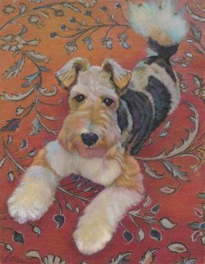 Wire Fox Terrier,coat,hair,coconut,breed standard