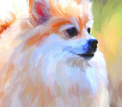 Pomeranian,Spitzdog,Keeshond,Overweight Pomeranian,Zwergspitz,Pomeranian Sheepdog,