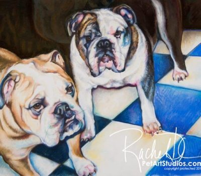 Bulldog,breeding,color,disqualifications