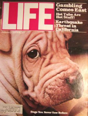 Chinese Shar-Pei, Life Magazine, cover,
