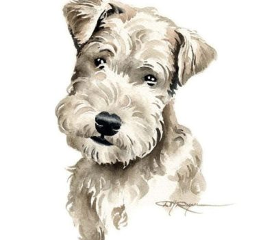 Grooming,Hand stripping, rolling, rolling a coat, clippering,Lakeland Terrier, Affenpinscher, German Wirehaired Pointer, Irish Wolfhound, Schnauzer, Bouvier, Wirehaired Pointing Griffon, Wirehaired Dachshund,coat,