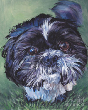 Shih Tzu,head,topknot,bubble