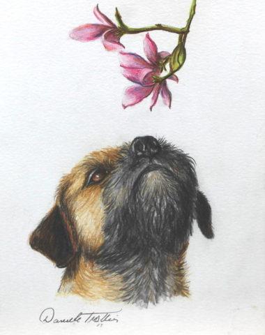 Border Terrier,Reedwater Terrier,Coquetdale Terrier,Ullswater Terrier