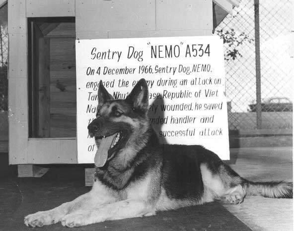 Nemo, military dog, German Shepherd Dog,Robert Thorneburg