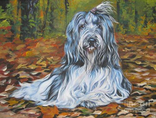 Schapendoes,Dutch Schapendoes,jumping,Bearded Collie,Puli,Polish Lowland Sheepdog
