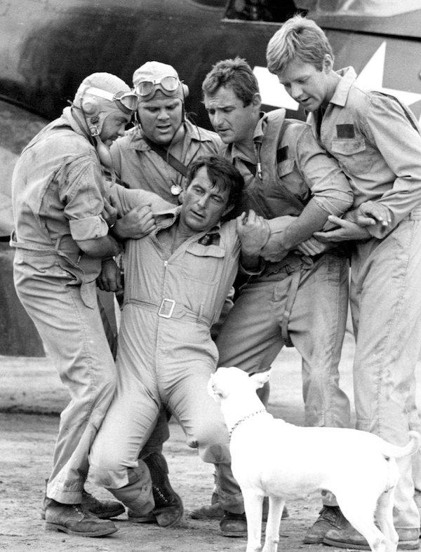 "Bull Terrier,Varkhond, TV, ""Pappy"" Boyington,Baa Baa Black Sheep"