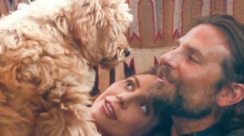 A Star is Born, Charlie,Bradley Cooper