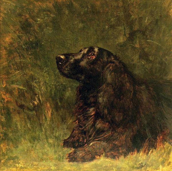 majestic,breed standard,Black and Tan Coonhound,Field Spaniel,Maremma, Cane Corso, Neapolitan Mastiff