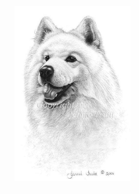 Samoyed,color,