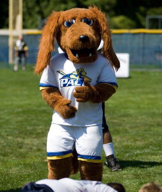 T-Bone, Irish Setter, mascot