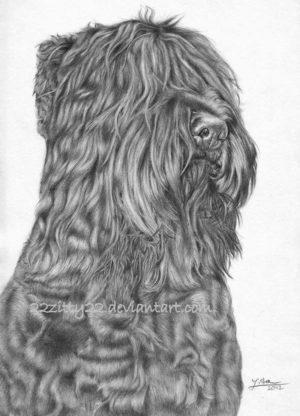 Black Russian Terrier,Roy,Blackie Airedale Terrier, German Shepherd Dog, Giant Schnauzer,Rottweiler, Moscow Water Dog, Newfoundland, Great Dane, Eastern European Shepherd,Caucasian Ovcharka,Red Star Kennel,Black Pearl of Russia