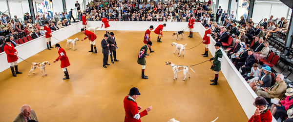 hounds,,Lycetts Festival of Hunting