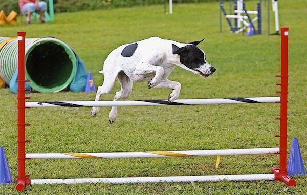 Pointers, Search and Rescue,Agility