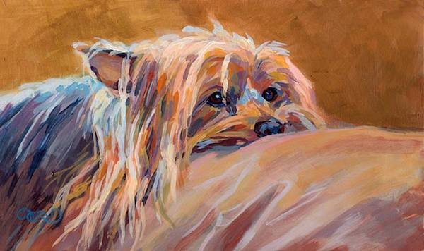 Sydney Silky,Silky Terrier,Broken-coated Terrier,Yorkshire Terrier,Australian Terrier
