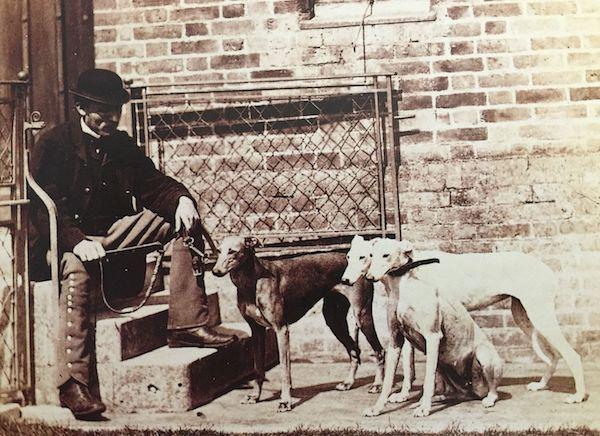 Sandringham Kennels,Queen Elizabeth, Queen Alexandra, Basset Hounds, Irish Wolfhounds, Scottish Deerhound, Dachshunds, Collies, Samoyeds, Fox Terriers, Pugs, Pekingese, Borzoi,Japanese Spaniels,Labrador Retriever