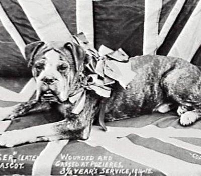 Boxer, Doberman Pinscher, Marine Corp, Fritz,Digger,Marine War Dog Training School