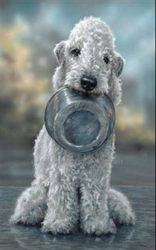 Lord Rothbury, Bedlington Terrier, Ainsley's Piper