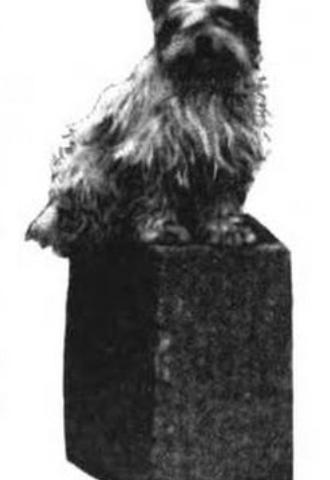 Tibetan Terrier ,Shantung Terrier,Lhasa Apso,Mrs. (Alicia) Archibald Little