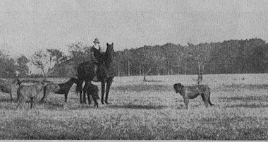 Irish Wolfhound,Mrs. Norwood Browning Smith,president,Herbert Hoover