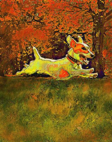 Jack Russell Terrier,Parson Russell Terrier, Russell Terrier.