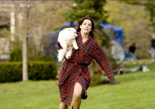 The Proposal,American Eskimo Dog,Film,Movie,Sandra Bullock
