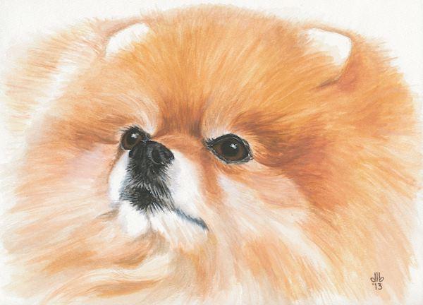 Pomeranian,weight,