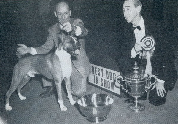 Best in Show, record,Boxer,CH Bang Away of Sirrah Crest