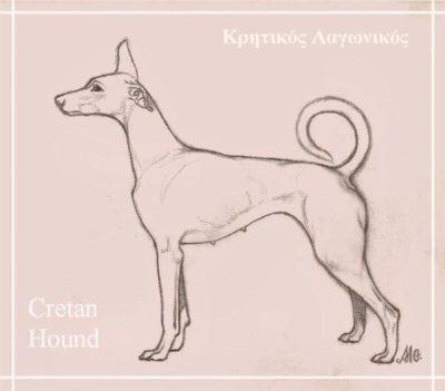 Cretan Hound,Kρητικός Iχνηλάτης, Kritikos Lagonikos, Cretan Rabbit Dog, Kritikos Ichnilatus,Cretan Hunting Dog, Cretan Tracer, Cretan Tracing Dog
