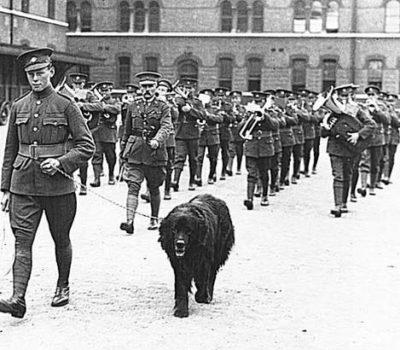 Gander,Newfoundland,mascot,war dog,