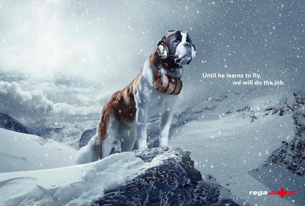 Saint Bernard, TV,commercial, ad, Zorayo,REGA