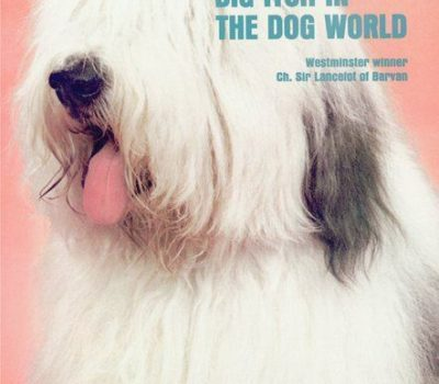 Old English Sheepdog, Sports Illustrated, Ch. Sir Lancelot of Barvan, dog show, Westminster Kennel Club Dog Show, Westminster Kennel Club Dog Show Best in Show,