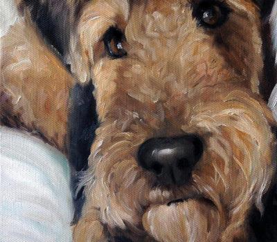 Black and Tan Terrier, Welsh Terrier,Daeargi Cymraeg