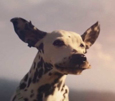 Dalmatian, Super Bowl, commercial, Budweister, Ad, TV, Super Bowl
