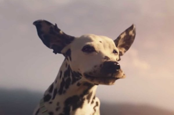 Dalmatian, Super Bowl, commercial, Budweister, Ad, TV, Super Bowl