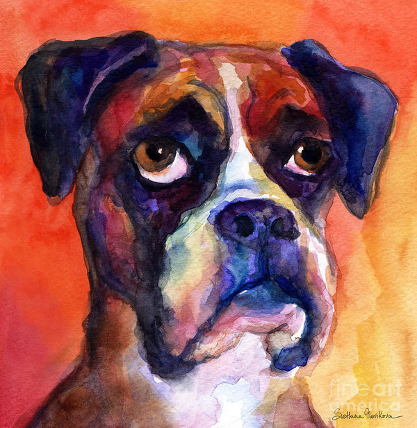Boxer,terms,color,