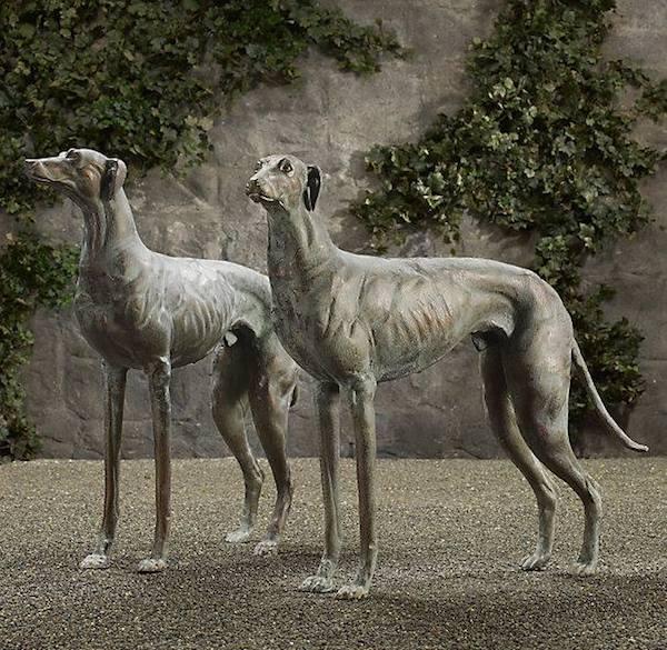 Greyhound,sighthound, vision,area centralis,visual streak