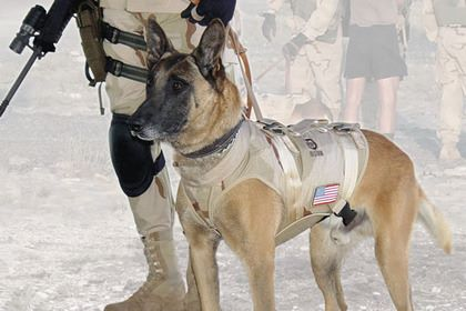 state dog, New York, military dog, law enforcement dog,working dog,Cairo,Belgian Malinois,Seal Team Six