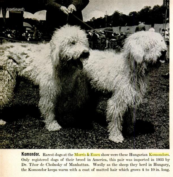 Komondor,Oscar Beregi,Twilight Zone