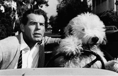 Old English Sheepdog,Bill Koehler,Lillybrad's Sammy's Shadow,The Shaggy Dog,movie,film,LillianLovejoy, Disney